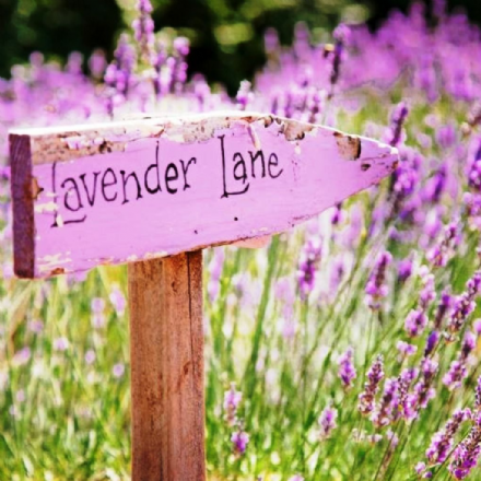 Lavender Lane Scented Wax Melts - Floral Type Fragrance.